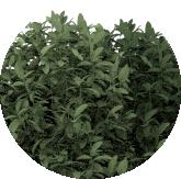 11-especies-adaptadas-al-proyecto
